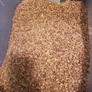 honey beans oloyin sweet brown beans